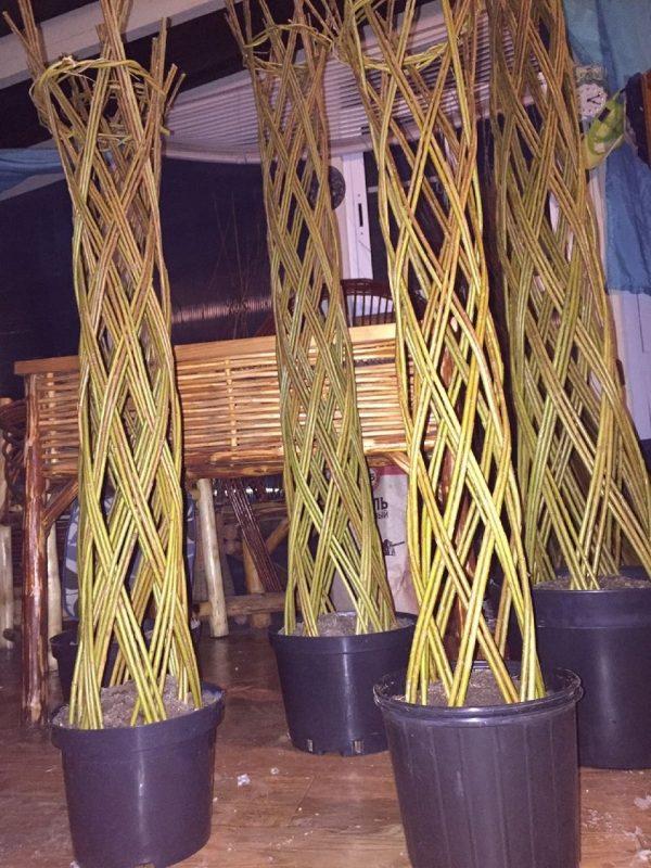 плетеное дерево фото