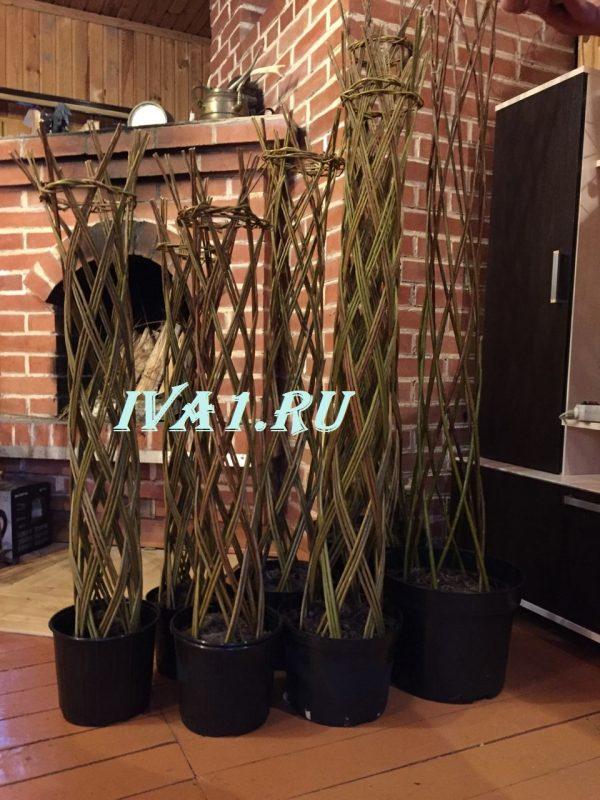 плетеные ивовые деревья
