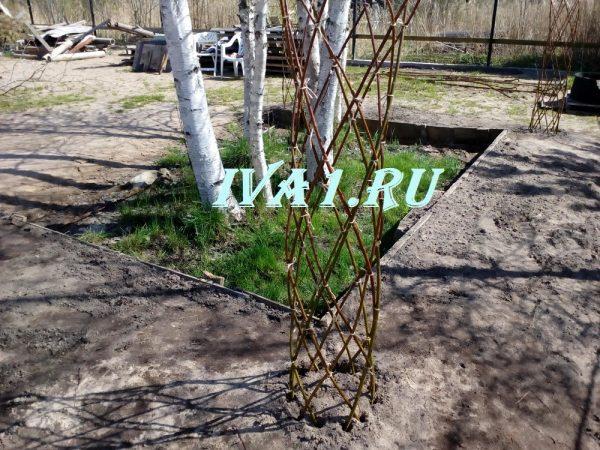 забор плетеное дерево