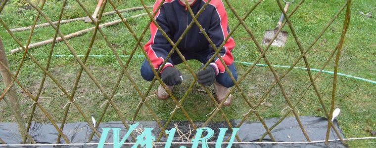 живой забор на даче