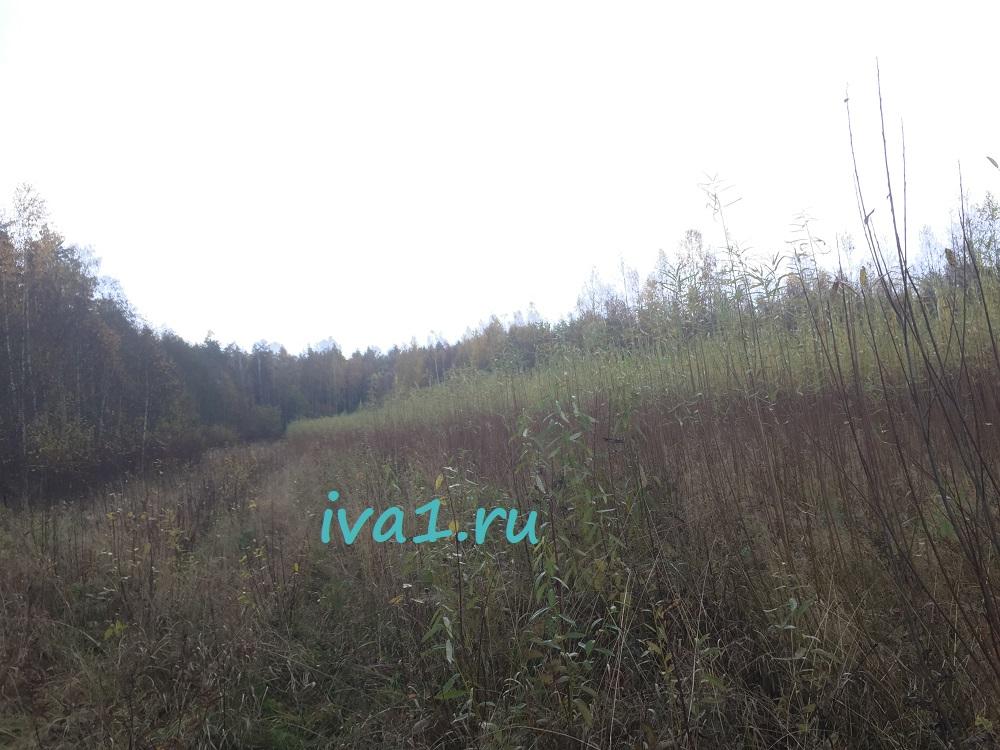 наша плантация ивы