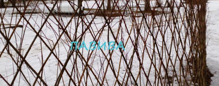 живая изгородь морозостойкая